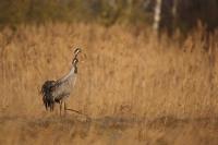 Na ptaki z Canonem 5D Mark III_4