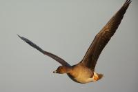 Na ptaki z Canonem 5D Mark III_8