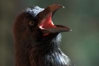 ptaki_w_niewoli_3