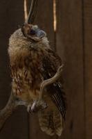 ptaki_w_niewoli_4
