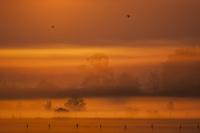 Poranek w Dolinie Odry
