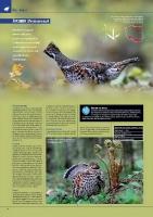 Strona 31